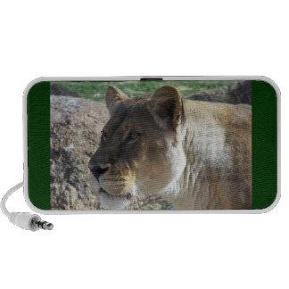 Lioness Speakers