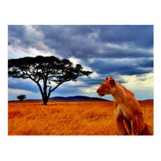 Lioness Storm Postcard