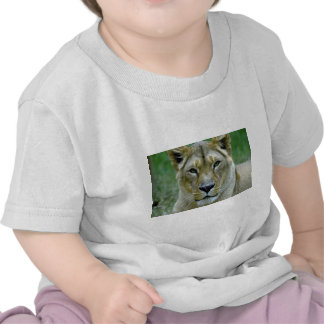 Lioness T Shirts