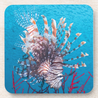 Lionfish Hard Plastic Coasters (set of 6)