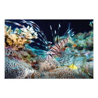 Lionfish Print Photo Art