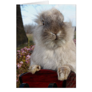 Lionhead Bunny in Sleigh, Christmas Card