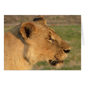 Lions Club, Lioness Intense (Katavi, Tanzania) Card