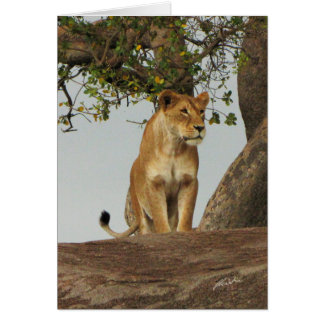 (Lions Clubs) Lioness On Kopje (Serengeti) Card