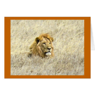 Lions of Africa Card