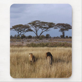 Lions on a plain Africa Mouse Pad