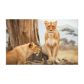 Lions Resting in a Mountain Landscape Canvas Print