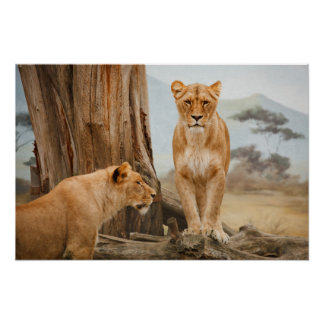 Lions Resting in a Mountain Landscape Poster