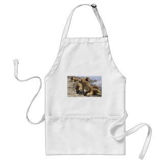 lions standard apron