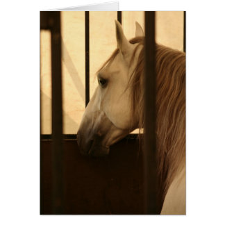 Lipizzan After the Show Card