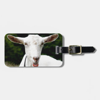 Lipstick on a goat luggage tag