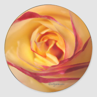 Lipstick Sunshine Rose Envelope Seal Stickers