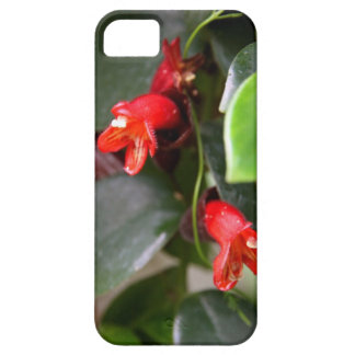 Lipstick Vine Case-Mate iPhone 5 Barely There Case For The iPhone 5