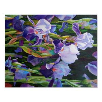 Lisa's Iris Garden Poster