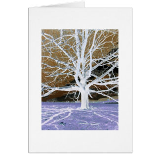 Lisa's Tree w/white border Card