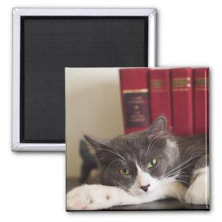 Literary Cat Magnet