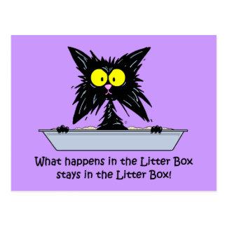 Litterbox Cat Postcard
