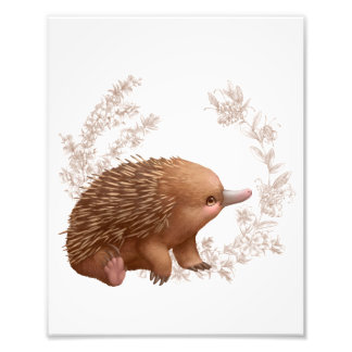Little Aussie Friends - Echidna Photo Print