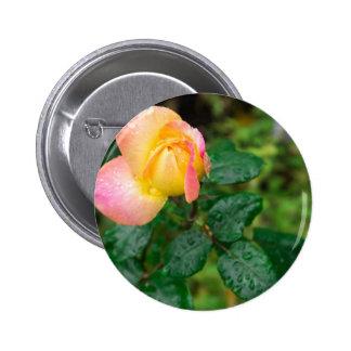 Little autumn rose with blur 6 cm round badge