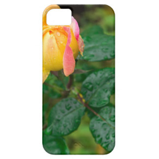 Little autumn rose with blur case for the iPhone 5