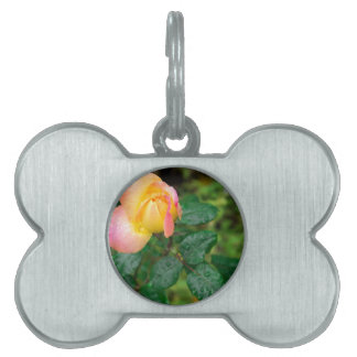 Little autumn rose with blur pet ID tag