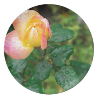 Little autumn rose with blur plate