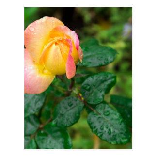 Little autumn rose with blur postcard