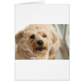 Little Awesome Abby the Yorkie Poo Greeting Cards
