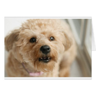 Little Awesome Abby the Yorkie Poo Greeting Card