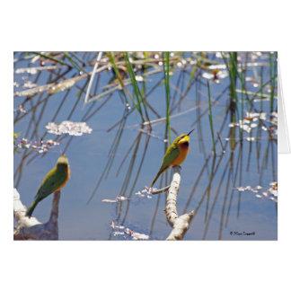 Little Bee Eater birds Greeting Card