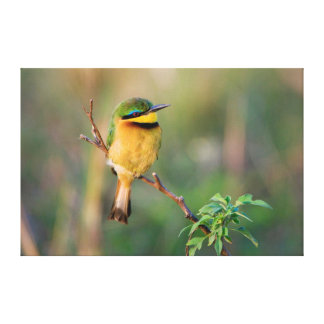 Little Bee-Eater Perching On A Branch, Maasai Gallery Wrap Canvas