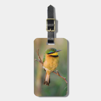 Little Bee-Eater Perching On A Branch, Maasai Tag For Bags
