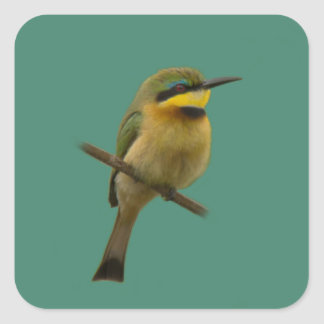 Little Bee-Eater Square Sticker