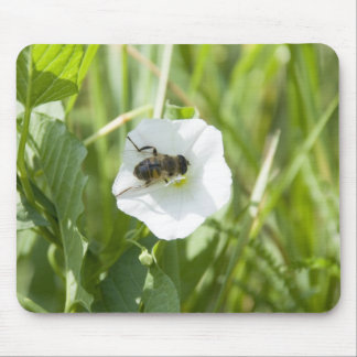 little bee mousepads