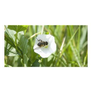 little bee custom photo card