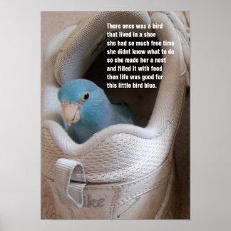 Little Bird blue pacific parrotlet in a shoe poste Poster