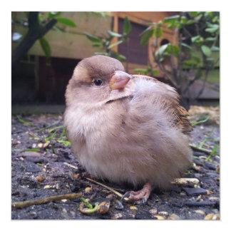 little bird 13 cm x 13 cm square invitation card