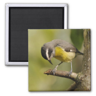 Little bird looking at his feet square magnet