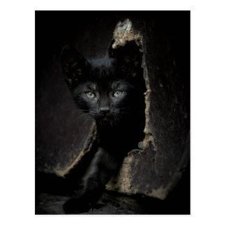 Little Black Kitty Postcard