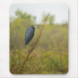 Little Blue Heron Finds Shelter Mouse Pad