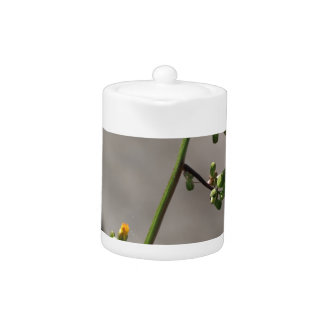 Little Bug, Little Flower