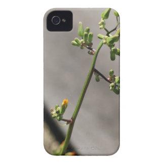 Little Bug, Little Flower Case-Mate iPhone 4 Cases