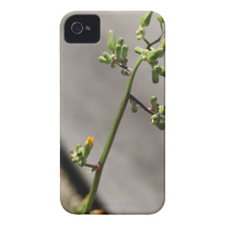 Little Bug, Little Flower iPhone 4 Case