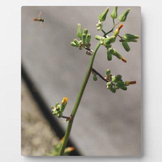 Little Bug, Little Flower Plaque