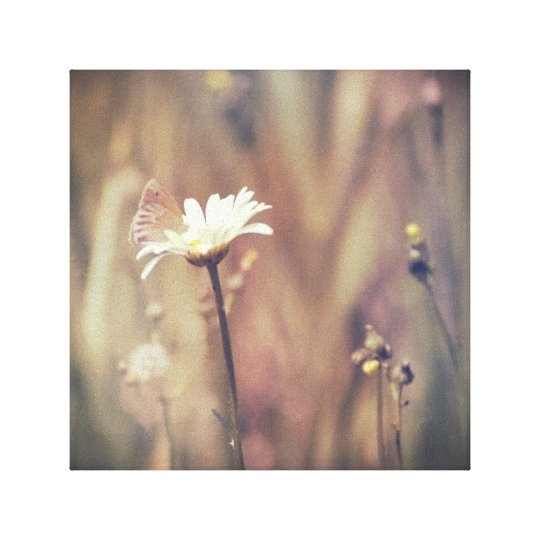 Little Butterfly on Daisy Flower Soft Nature Photo Canvas Print