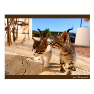 Little Cats - postcard by of Burgundy