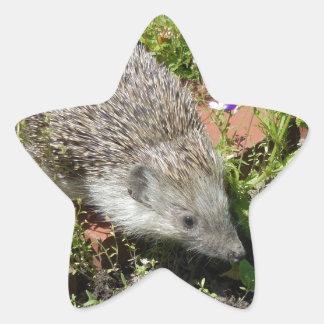 little cute visit in the garden star sticker