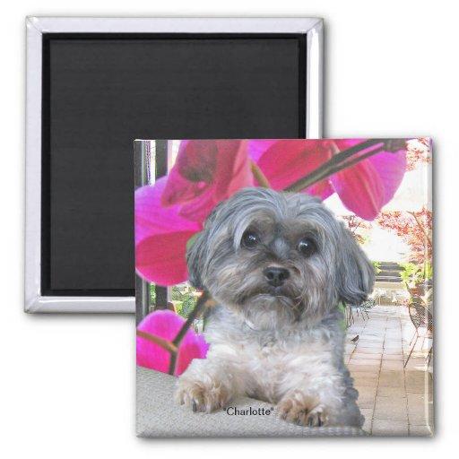Little Dog Charlotte Magnet Refrigerator Magnets