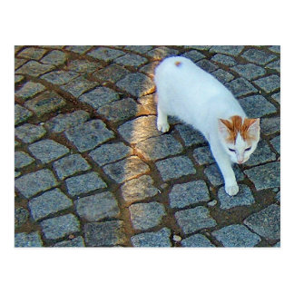 Little Dot Ephesus Cat Postcard