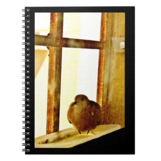 Little Dove Notebooks